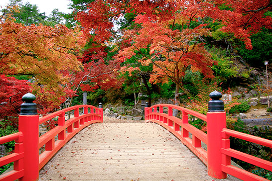 Autumn in Momiji-dani Park