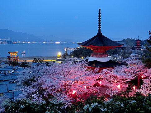 Two-storied pagoda and cherry blossoms at night